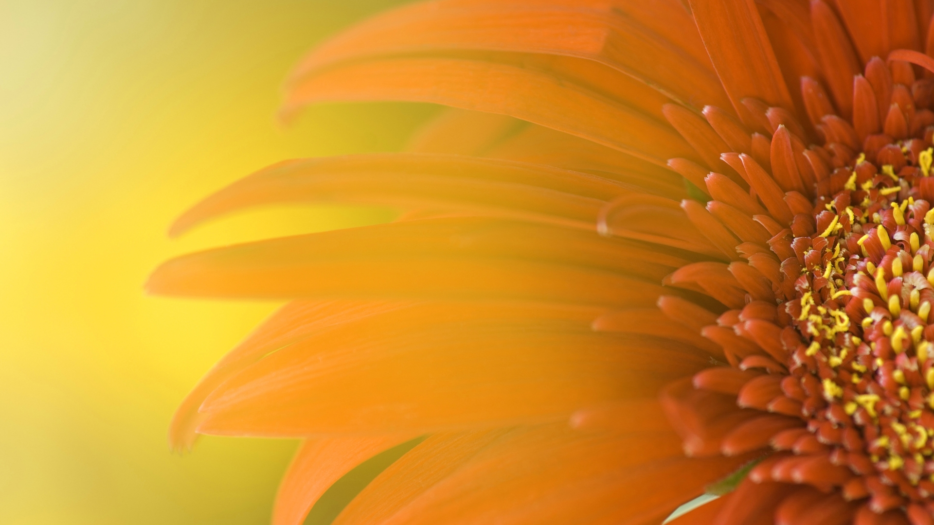 Windows 8 Flower Wallpaper