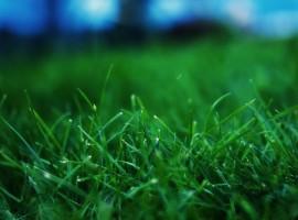 Close up grass wallpaper