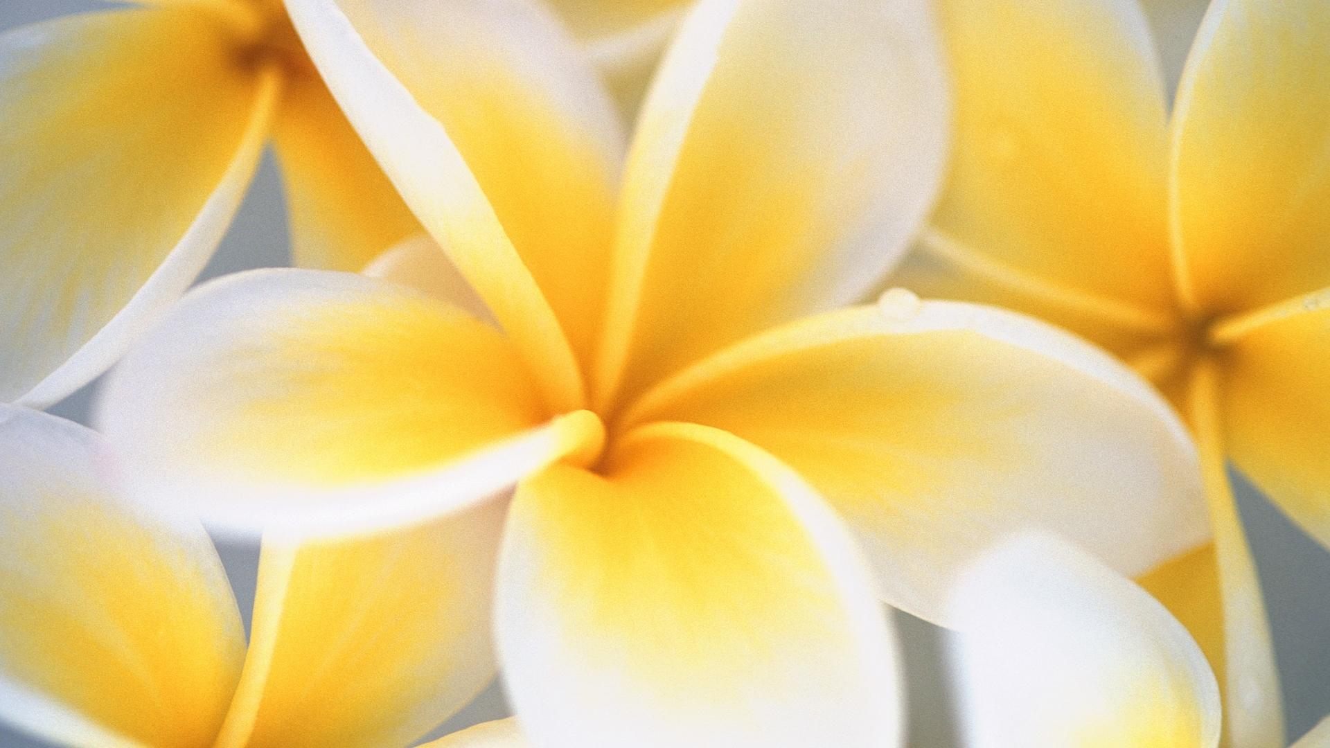 Yellow flower wallpaper hd wallpapers mightylinksfo