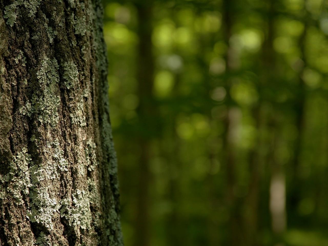 high resolution 1080p forest wallpaper