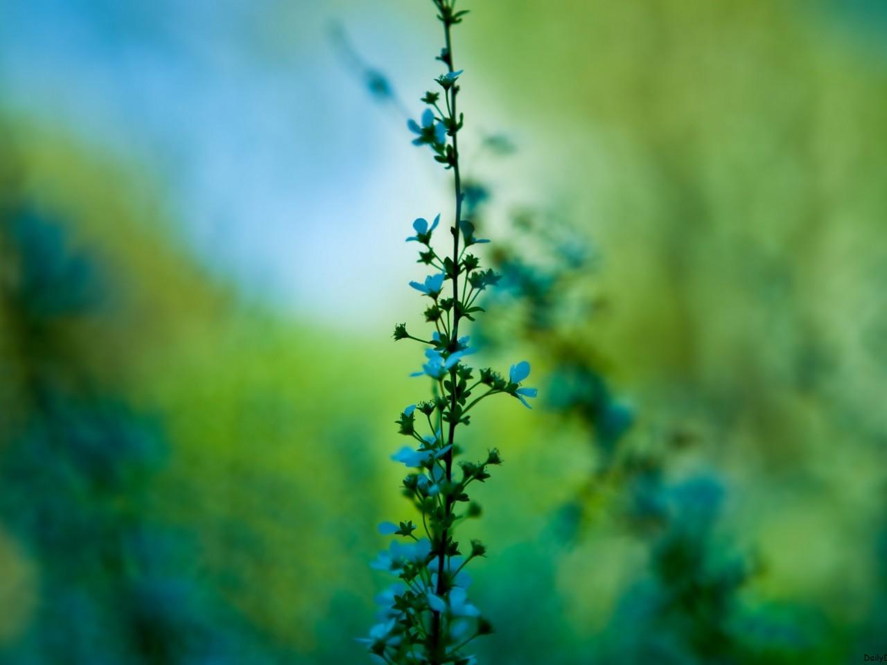 Delicate Blue Flowers Hd Wallpapers