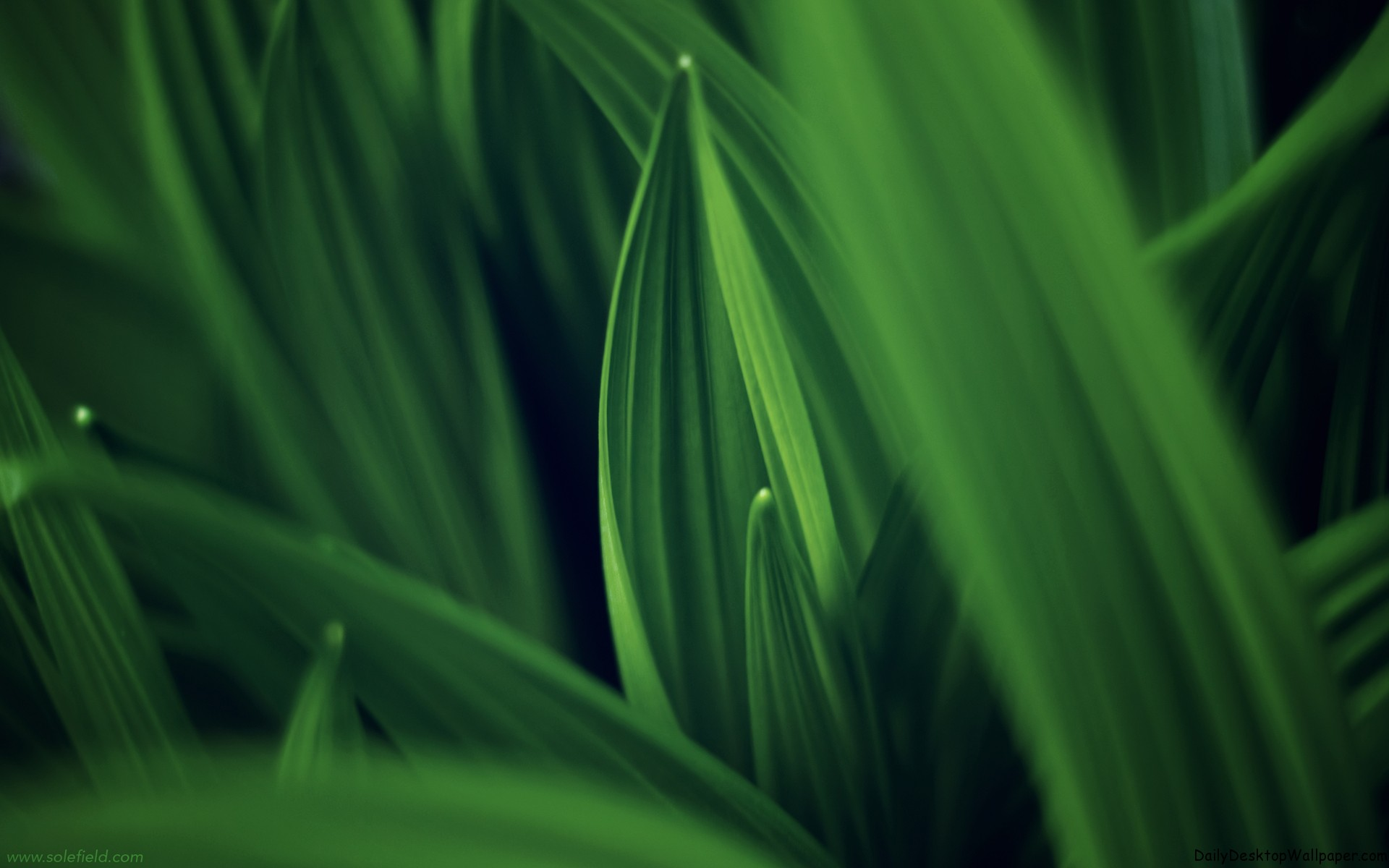Leaves of Green - HD Wallpapers