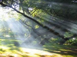 Summer Sun Rays