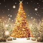 Beautiful Christmas Trees Wallpaper