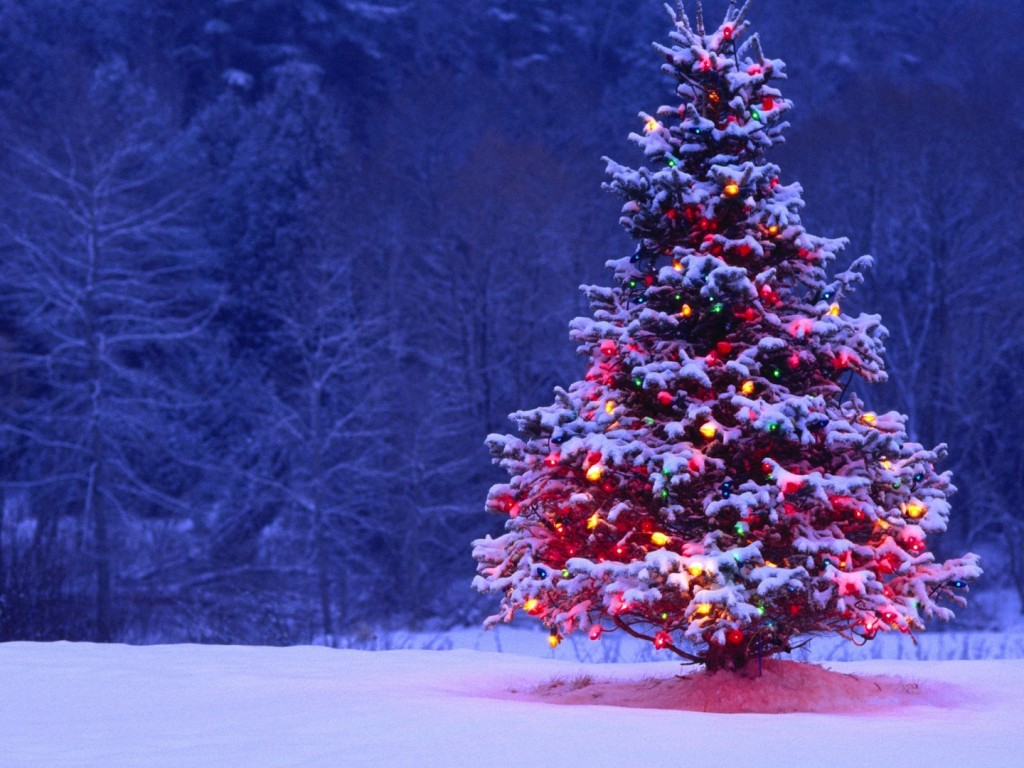 Lone Christmas Tree Wallpaper - HD Wallpapers