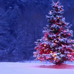 Lone Christmas Tree Wallpaper