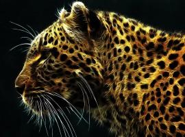 The Tigers Stare