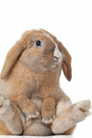 6 Of The Most Adorable Bunnies Wallpaper Pack Hd Wallpapers