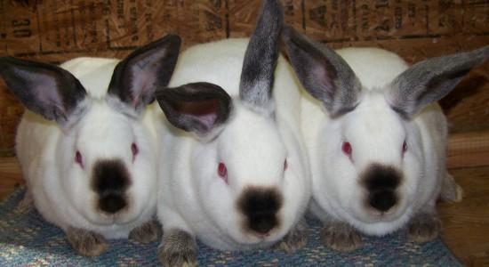 3 Adorable HD Bunny Wallpaper