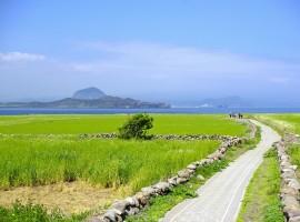 A Beautiful Path To The Sea
