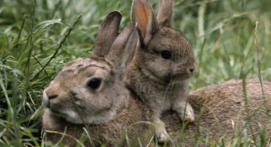 Adorable HD Bunnies