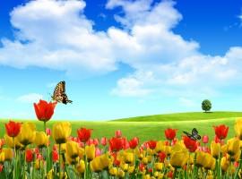 Beautiful Butterflies In The Field