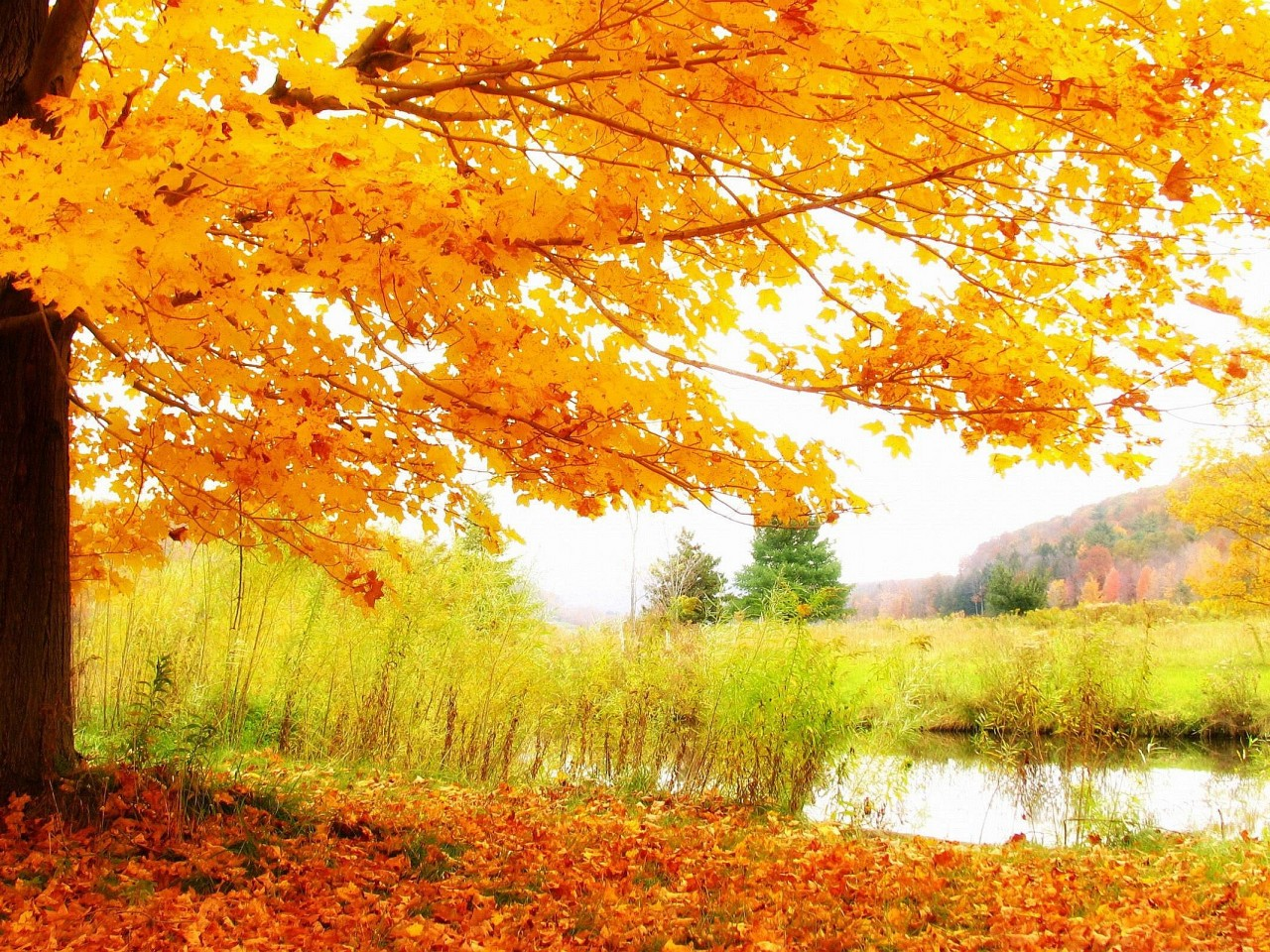 High Resolution Fall Wallpaper: HD Autumn Scenery Wallpaper