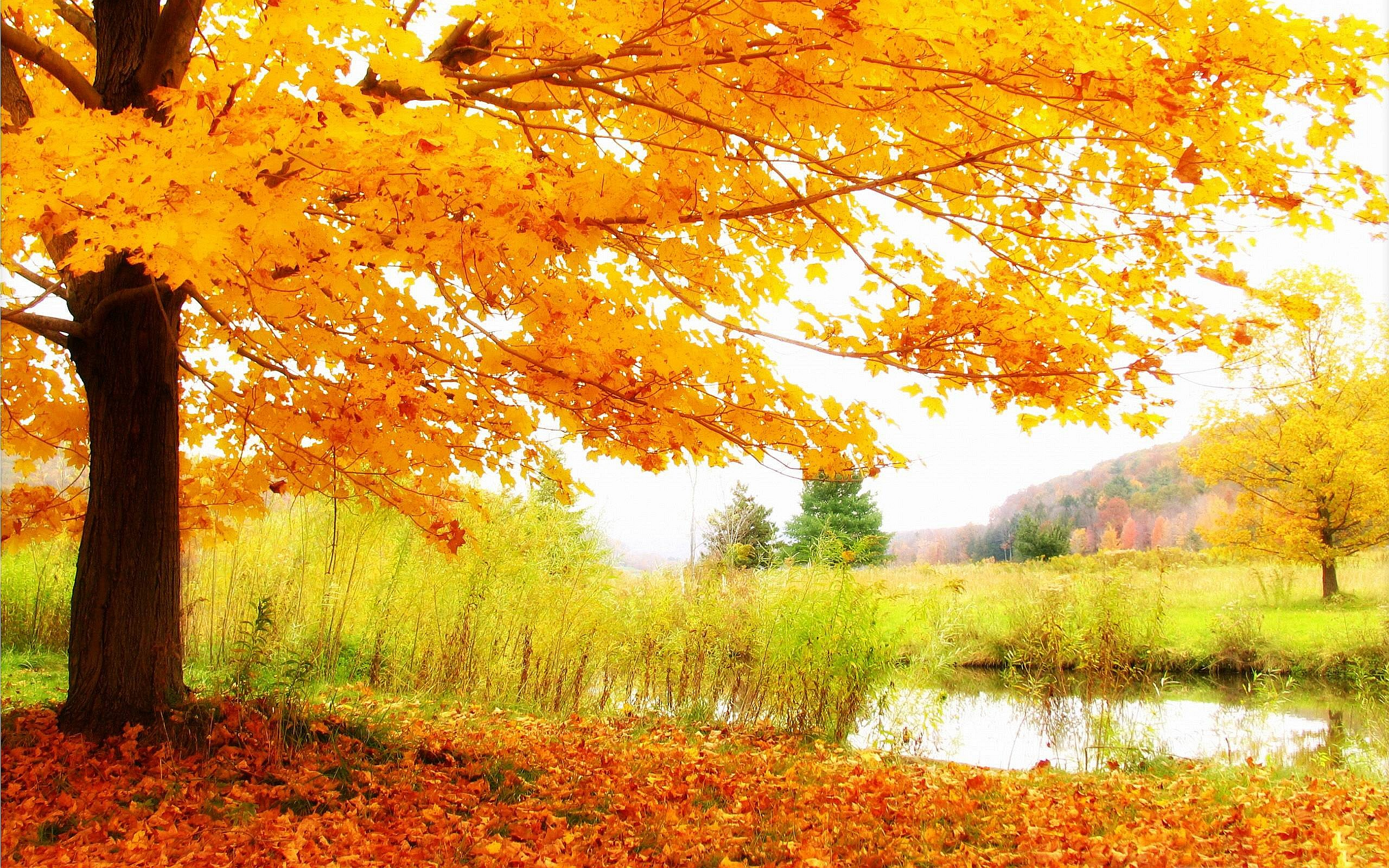 hd autumn scenery wallpaper - hd wallpapers