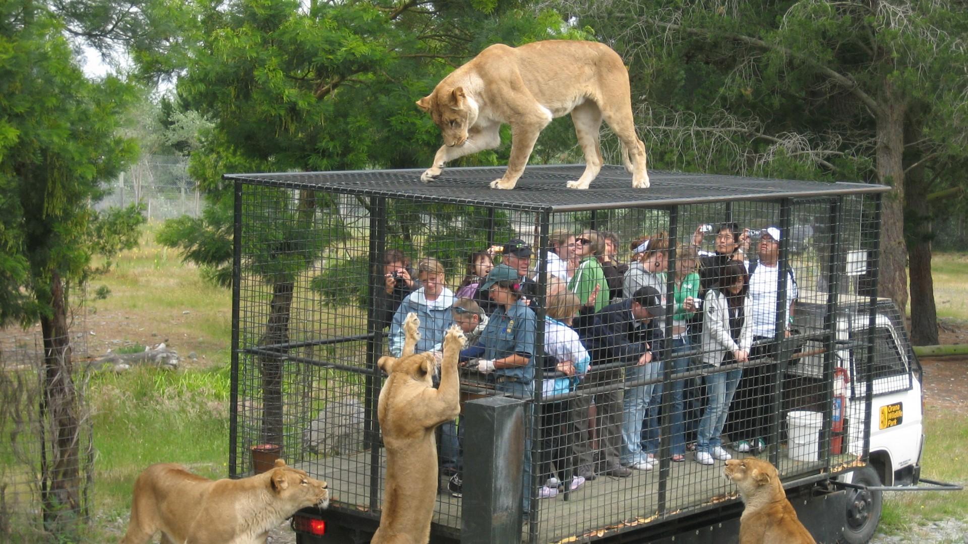 Tire Zoo Bloomington Mn