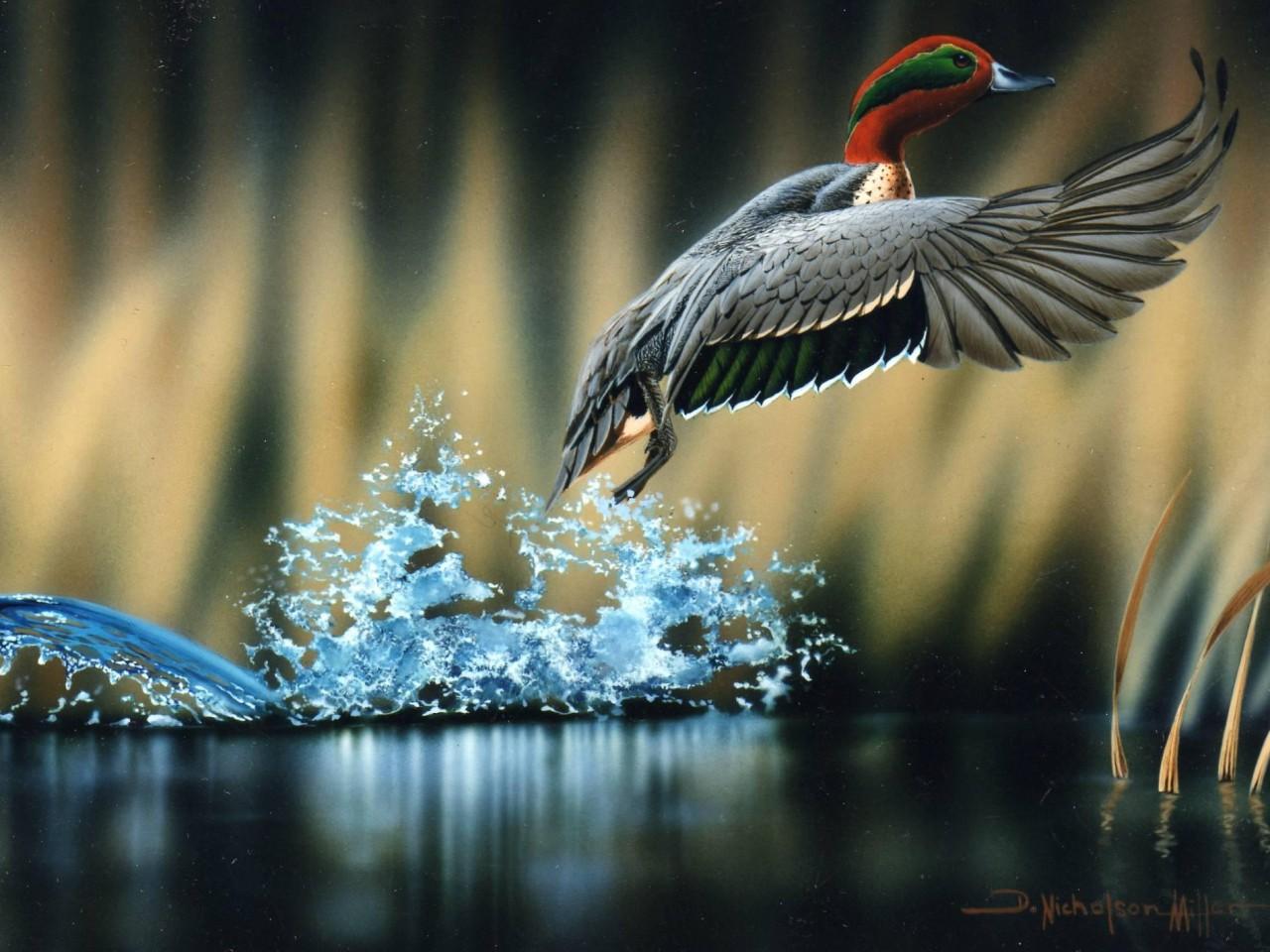 High Resolution Wallpaper Wildlife