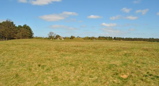 Grassy Countryside Wallpaper
