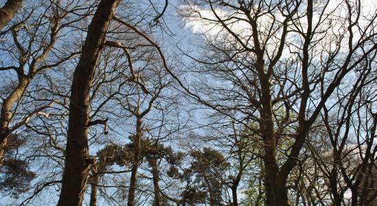 High Tree Tops