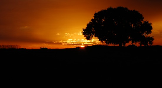 Beautiful Night Tree Shadow