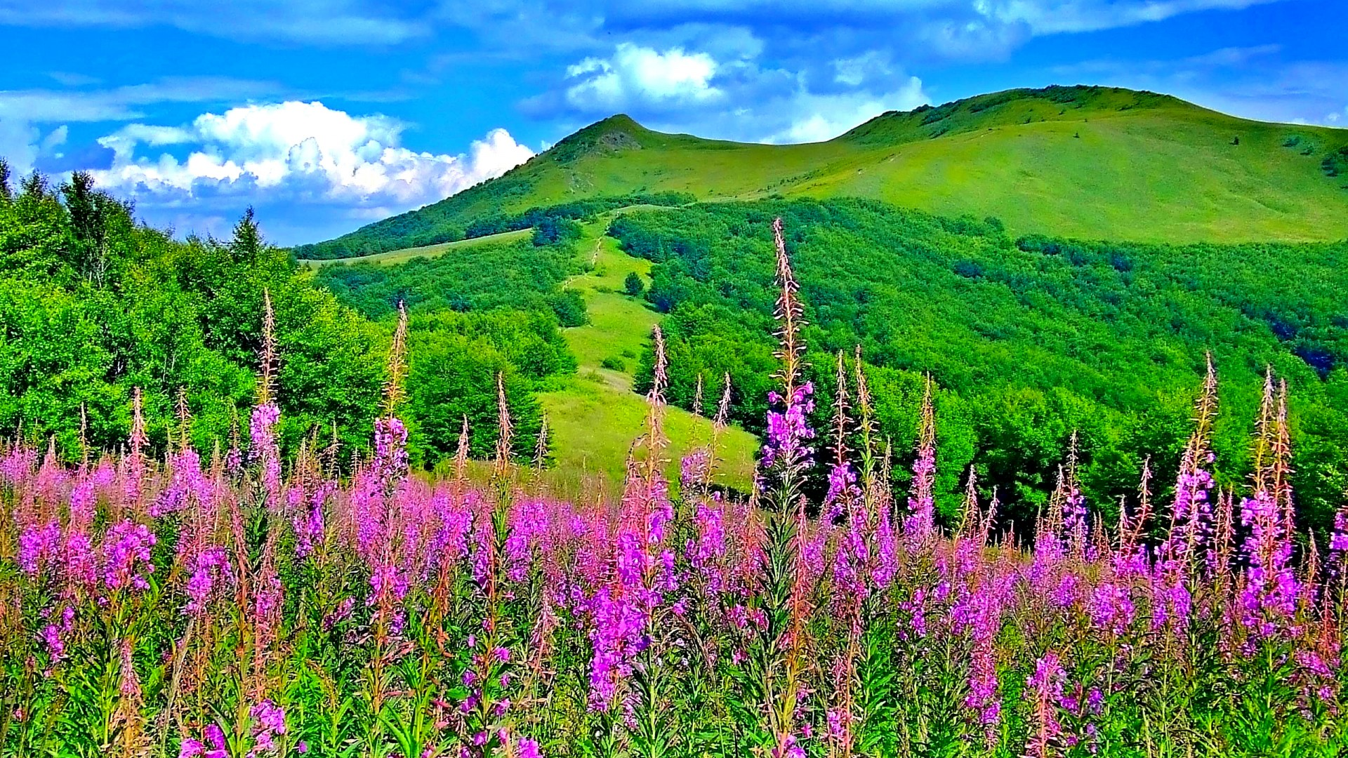 Beautiful Picturesque Scenery With Wonderful Pink Flowers Hd Wallpapers