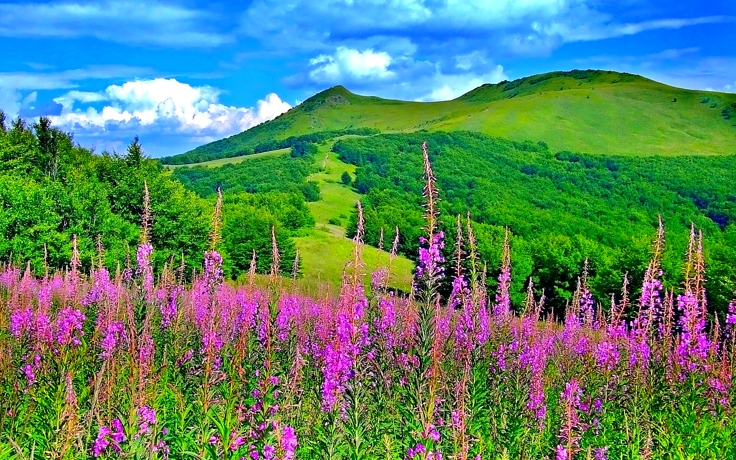 beautiful picturesque scenery with wonderful pink flowers