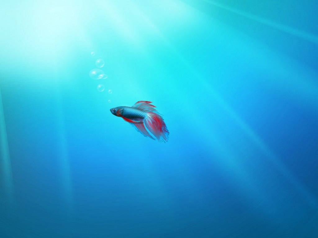 lonely fish windows 7 wallpaper - hd wallpapers