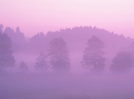 Pink Forest wallpaper