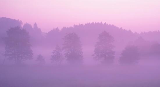 Pink-Forest-wallpaper