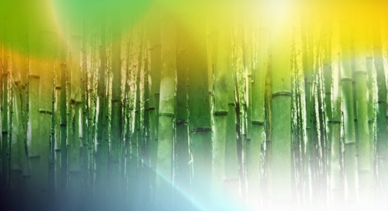 Windows-7-bamboo-wallpaper