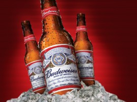 Ice Cold Budweiser