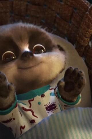 Meerkat Baby Oleg - HD Wallpapers