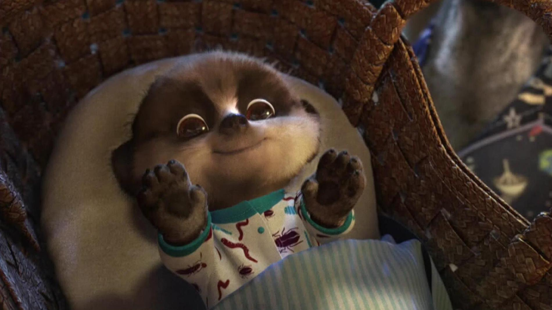 Meerkat Baby Oleg - HD Wallpapers