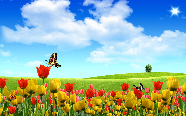 A Field of Beauty