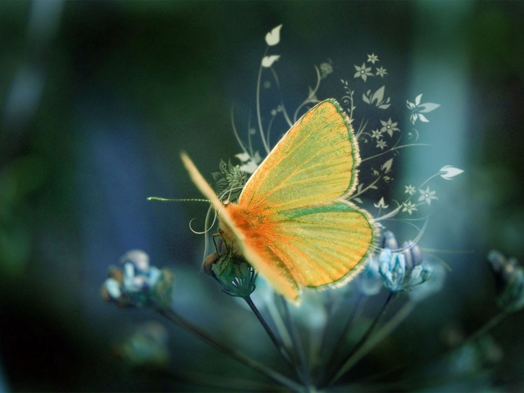 Beautiful Close Up Butterfly Hd Wallpapers