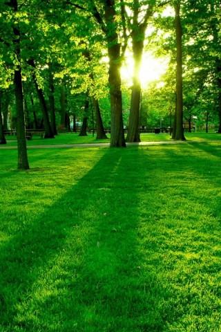 Gorgeous Green Grass Hd Wallpapers
