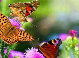 Three Beautiful Butterflies