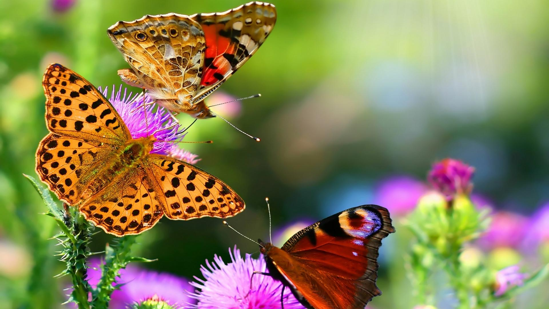 Three Beautiful Butterflies