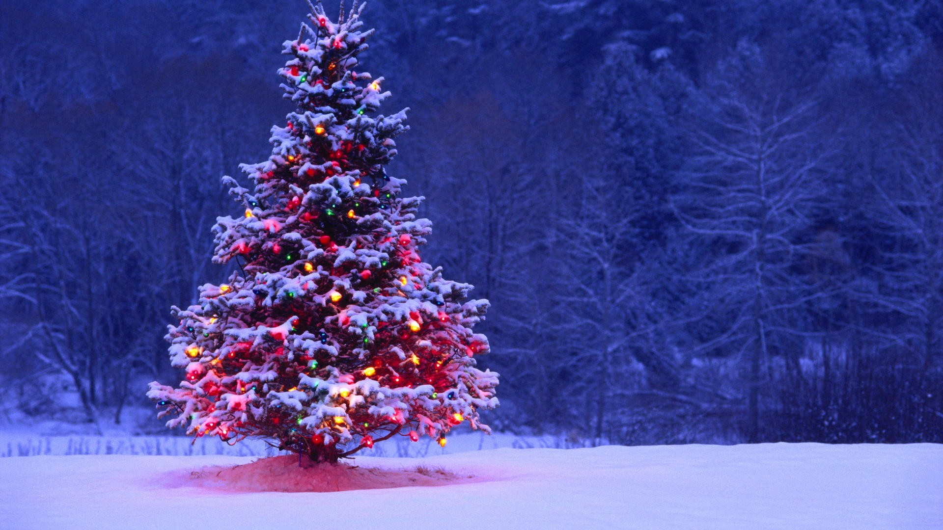 light covered snowy christmas tree - hd wallpapers