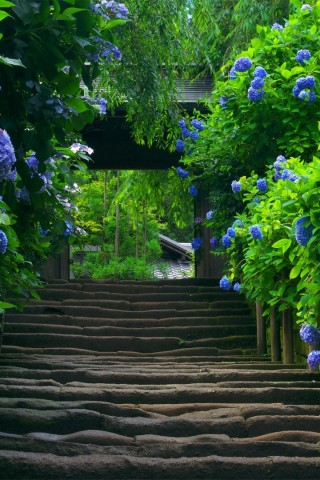 Stairway To A Garden Of Nature Hd Wallpapers
