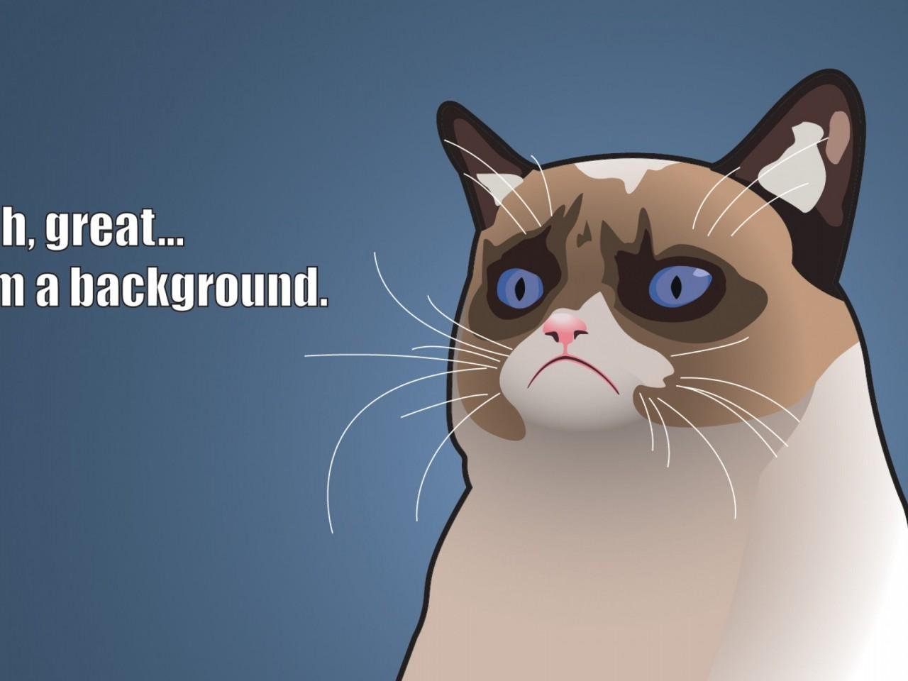 Funny Cat Wallpaper Hd Wallpapers