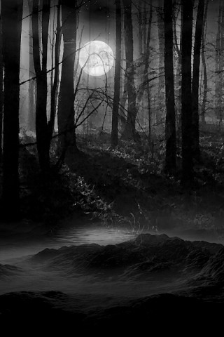 IPhone Wallpaper Download Secluded Dark Woods
