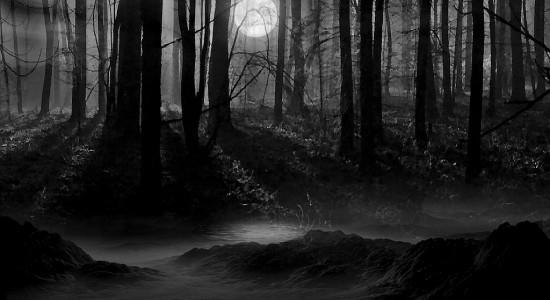 Secluded Dark Woods Wallpaper