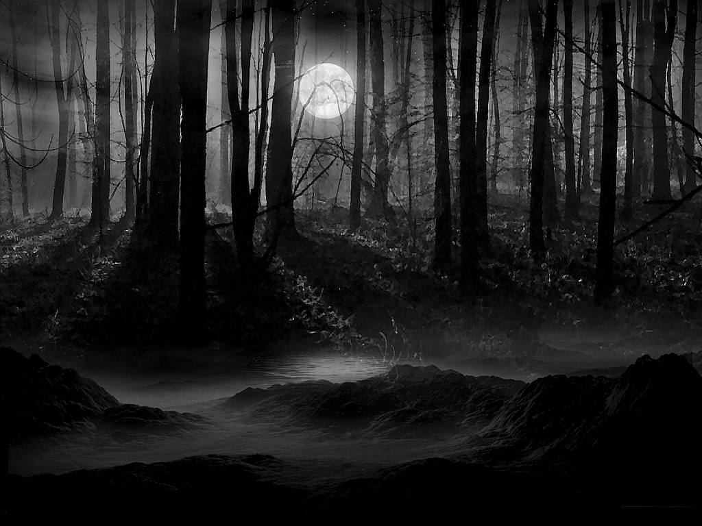 Secluded Dark Woods Wallpaper