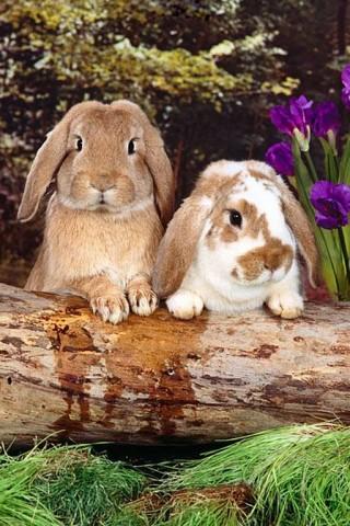 Two Cute Bunnies Wallpaper Hd Wallpapers