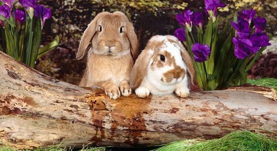 Two Cute Bunnies Wallpaper