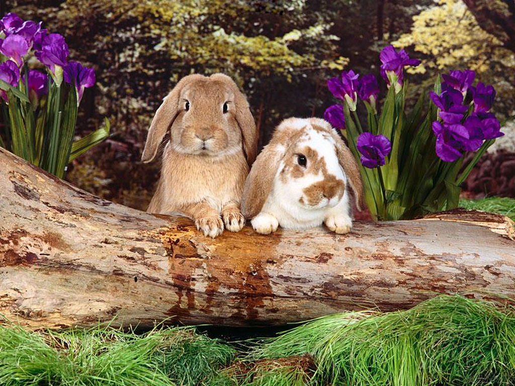 Two Cute Bunnies Wallpaper Hd Wallpapers