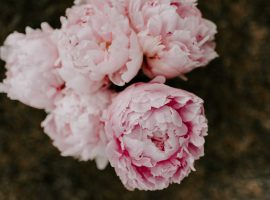 Bouquet of Pink Peonies HD Wallpaper