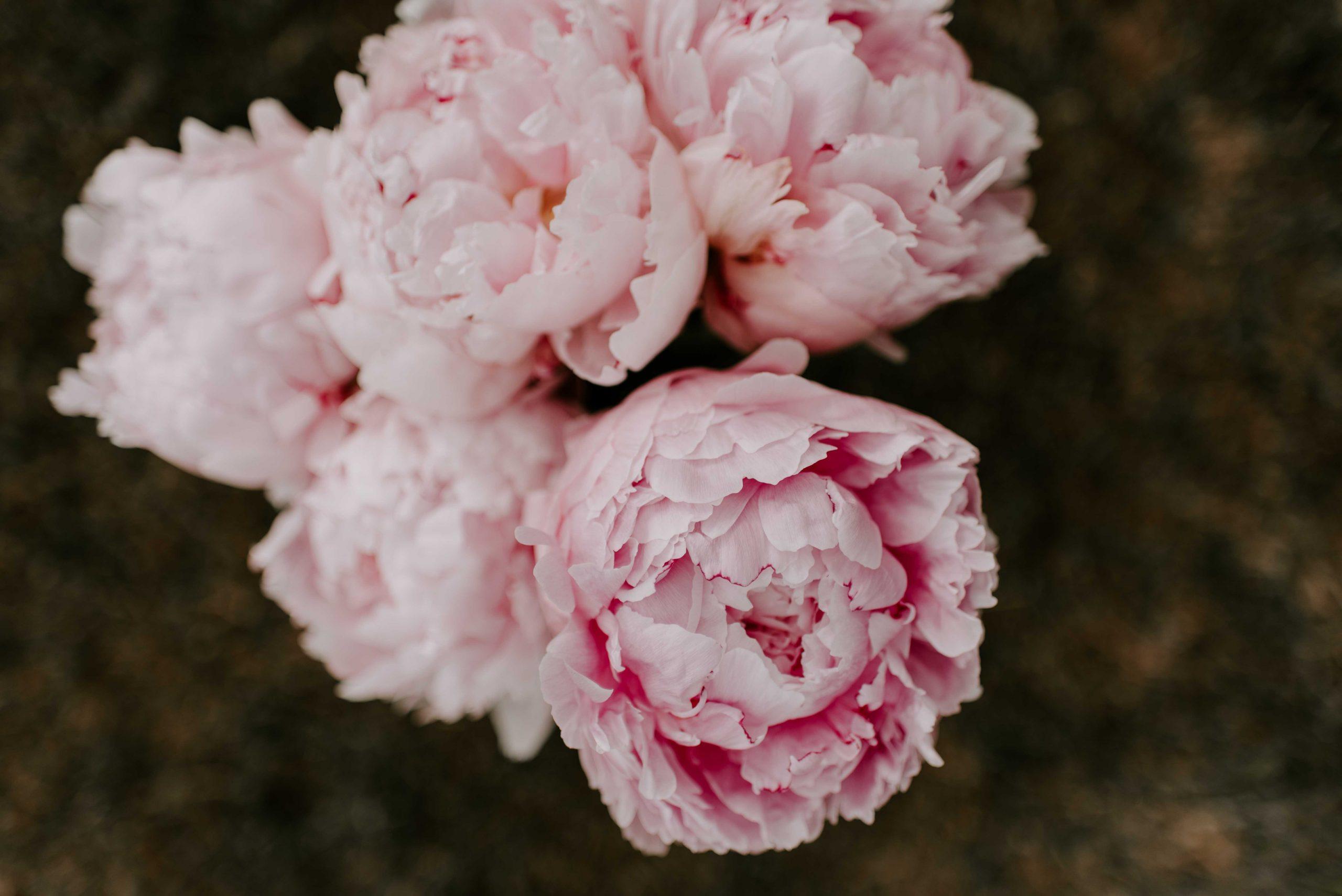 Bouquet of Pink Peonies HD Wallpaper