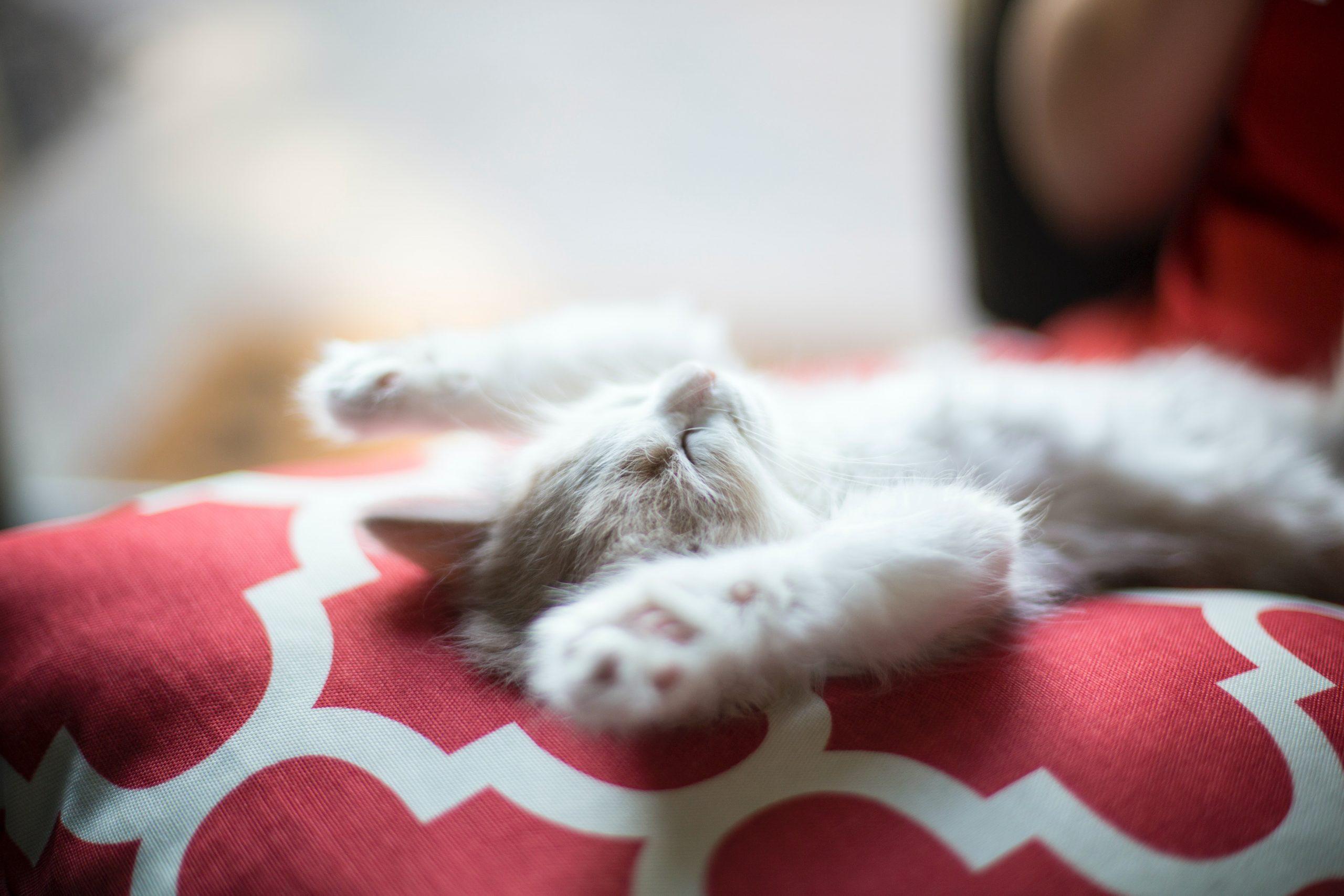 Cat Sleeping on its Back Wallpaper