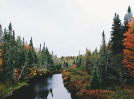 Forest River Scene Wallpaper